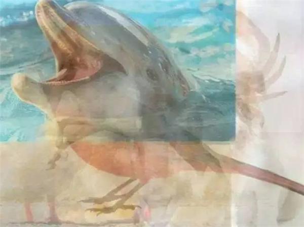 Người sáng tạo sẽ dễ dàng phát hiện ra chú cá heo.