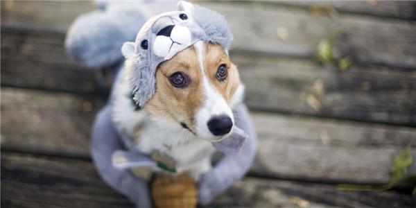 #4 Dắt thú cưng theo (còn các em chó nghiệp vụ trong trường hợp cấp bách thì không tính nhé). (Ảnh: Internet)