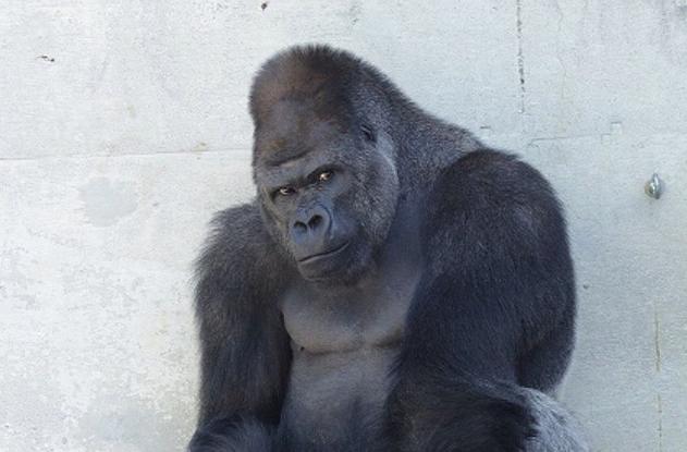 #9 Cho động vật trong công viên ăn (Ảnh: Internet)