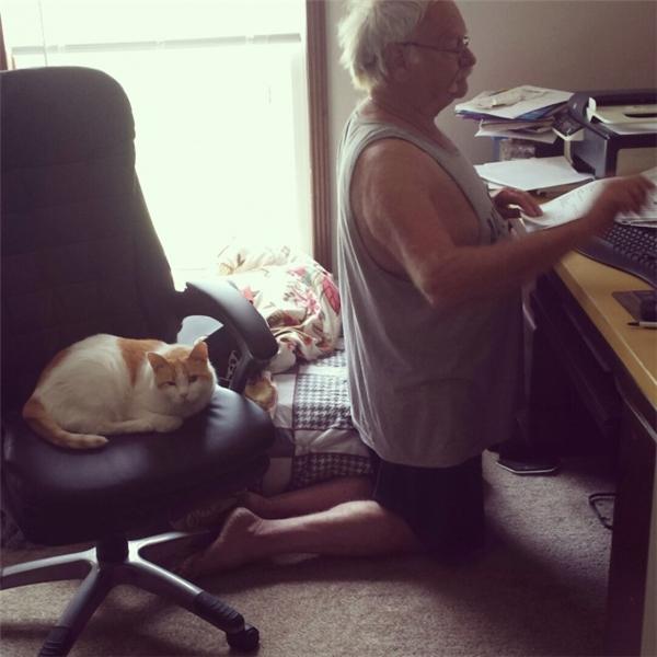 Trong cái nhà này (thật ra thì nhà nào cũng thế), mèo là vua nhé.