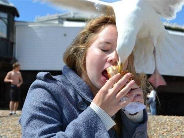 Miếng ăn còn chưa cho được vào miệng thì đã bị cướp một cách trắng trợn.