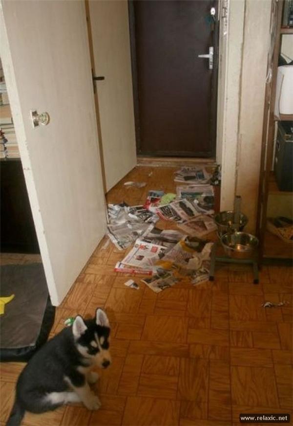 Con chỉ cắn giấy thôi chứ con không có xả rác ra nhà đâu nha, đứa nào xả đó.