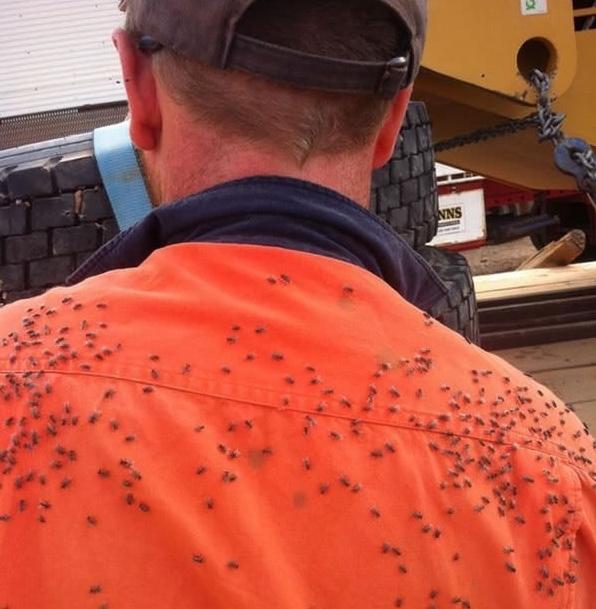 Lũ ruồi đangđịnh làm tổ trên áo người đàn ông nàythì phải.