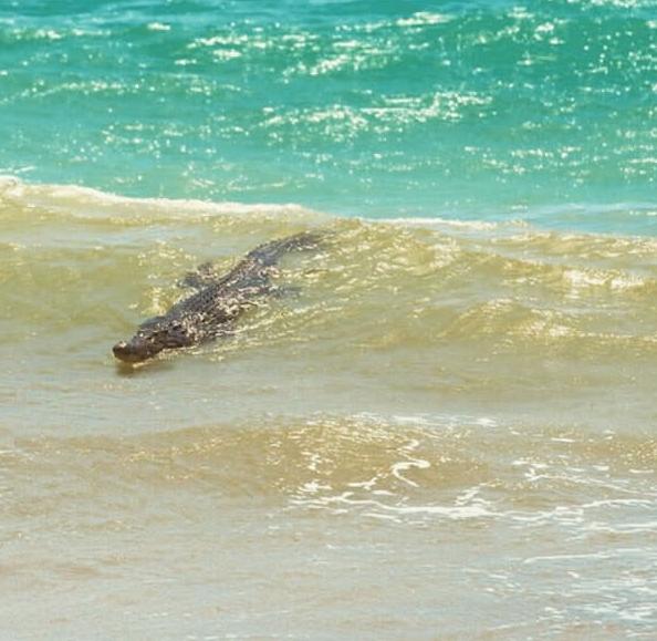Đang bơi mà bắt gặp người bạn này thì phải làm sao bây giờ?