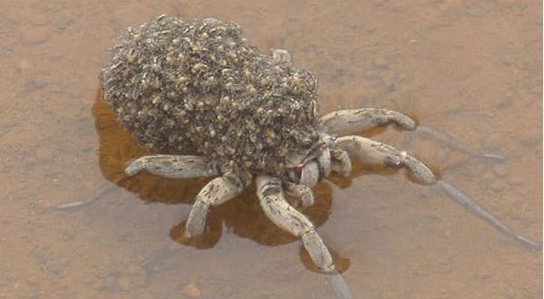 Trên thân mẹ nhện lúc này chắc phải có đến hàng triệu nhện con.