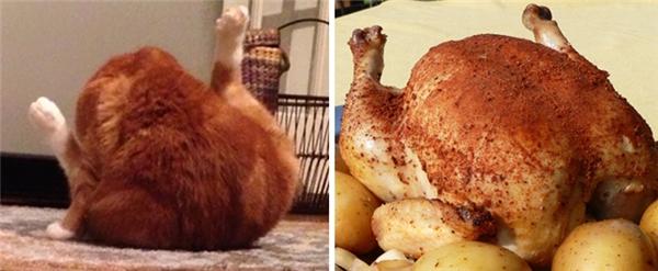 """Tư thế trong lúcvệ sinh thân thể khiến chú mèo nhìn không khác gì một chú gà """"khỏa thân"""" trên dĩa."""