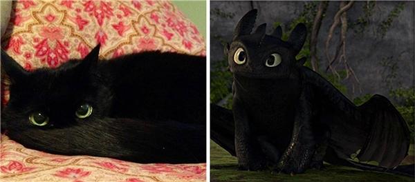 Chú mèo con này là phiên bản đời thực của chú rồng Toothless trong phim hoạt hình How to Train Your Dragon.