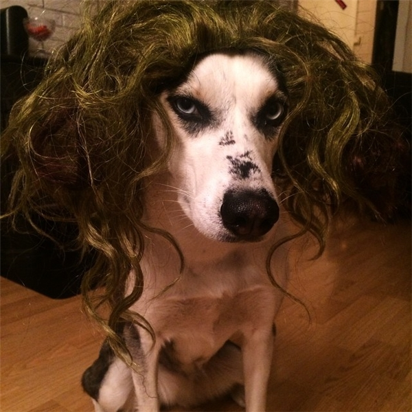 Nhìn mặt anh như thế này có giống thích đội tóc giả lắm không?