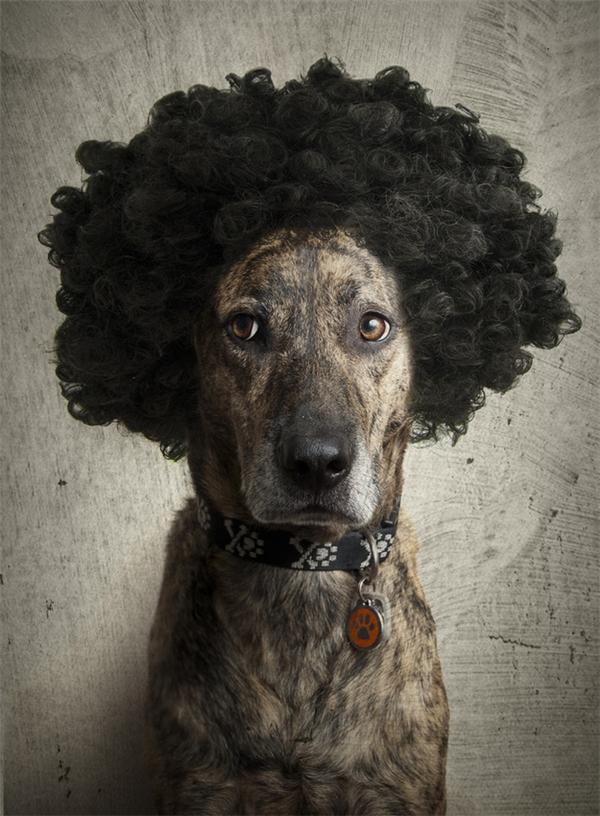 Mới làm tóc, trang điểm xong, đang chờ đi họp hội chị em bạn dì trong khu phố đây.