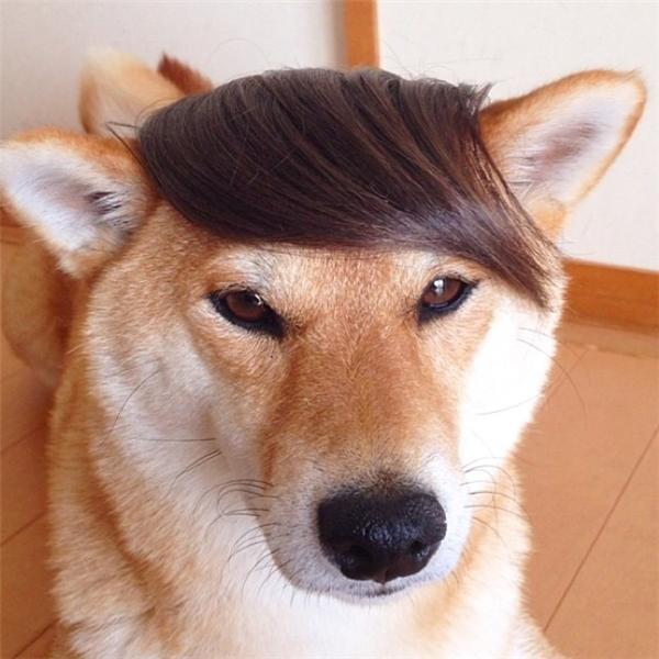 Đã đẹp trai sẵn rồi thì xài kiểu tóc nào cũng đẹp nhé.