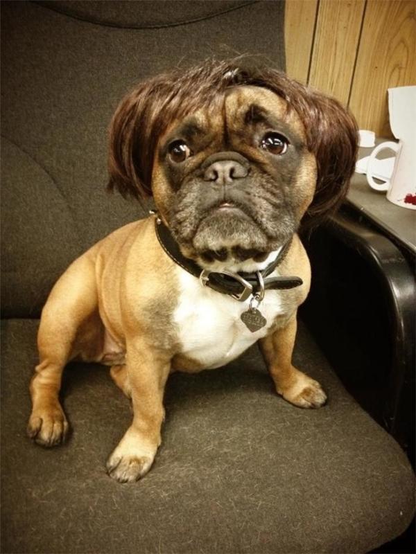 Nhân viên văn phòng đầu bù tóc rối vì công việc.