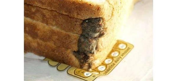 Chủ nhân của chiếc bánh sandwich này đã phát hiện xác một con chuột chết nằm gọn lỏn trong một góc ổ bánh.