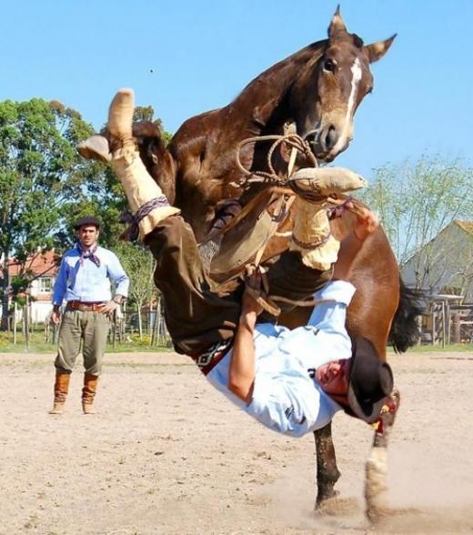 """""""Ông vừa mới bảo tôi là con ngựa tăng động à?""""."""