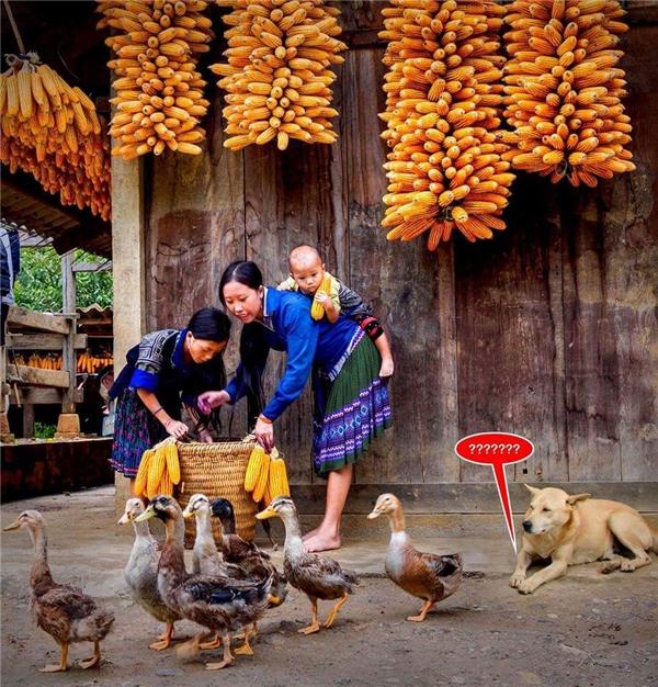 Bức ảnh đoạt giải nhấtcủa tác giả Vũ Chiếnđang gây tranh cãi kịch liệt trong cộng đồng nhiếp ảnh Việt Nam
