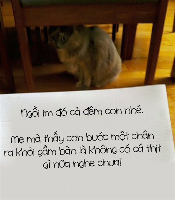 Chỉ vì bị thất tìnhmà mẹ nỡ lòng nào ngăn cấm tình yêu củacon dành cho... mèo trong mộngsao? Đi đêm có một hôm thôi, mẹ có cần phải phạt con nặng thế không?