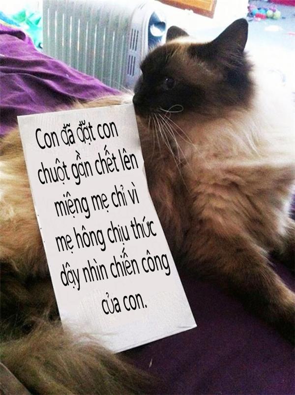 Thương mèocó con cá miếng thịt mẹ đều nhường cho mèo. Mèo thương mẹ, mèo chia cho mẹ cảcon chuột mà mẹ phạt mèo là sao?!