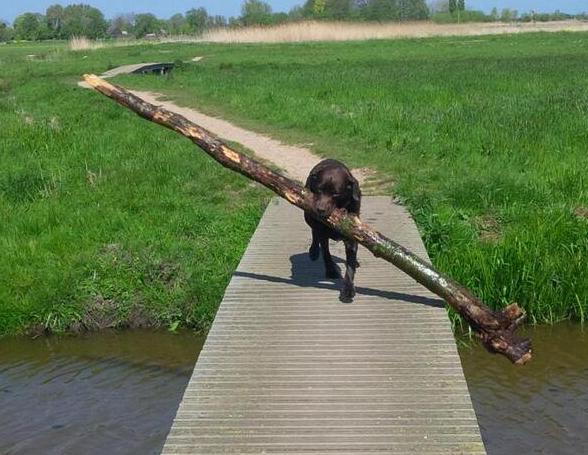 Chẳng hay nó phải tha cái cây to như cái cột đình thế về nhà để làm gì?