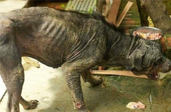 Kì tích cảm động của chú chó lang thang bị vứt bỏ nằm chờ chết