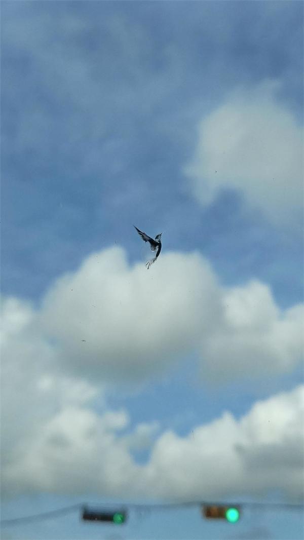 Đừng nhầm nhé. Đây không phải là một chú chim thật đâu mà là một vết dơ trên kính chắn gióthôi.(Ảnh: BuzzFeed)
