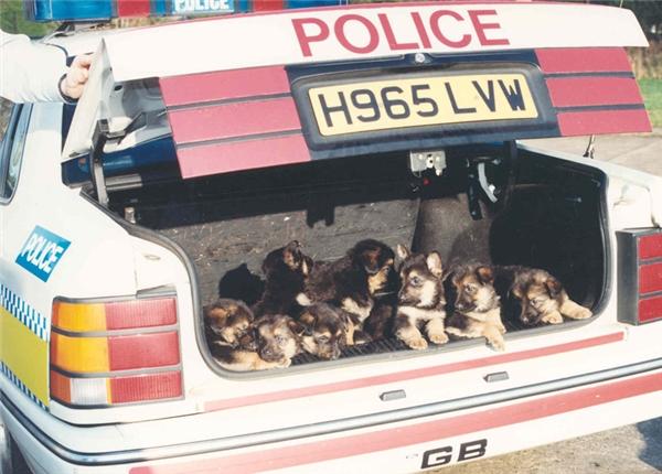 Bọn trẻ ngày nay đúng là không có phép tắc gì cả, mới tí tuổi đầu mà đã được cảnh sát hỏi thăm rồi.