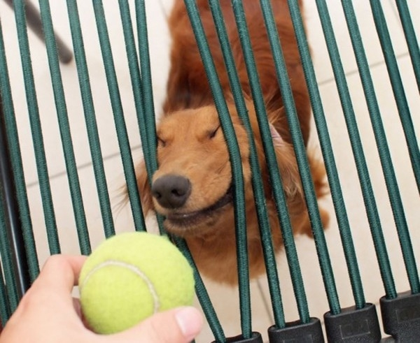 Con chó, chắc nó không biết nó đang làm chuyện mất mặt với xã hội đâu nhỉ?