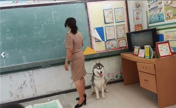 Cộng đồng mạng phát sốt với chú cún cưng ngoan ngoãn theo mẹ đi dạy
