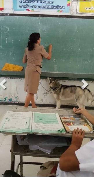 Để phòng hờ chú chó hiếu động, cô giáo này đã cột sợi dây ngang hông một đầu luồn vào vòng cổ của chú chó.