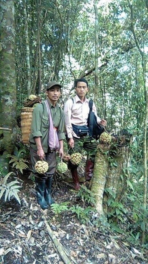 Một người dân đi thu hoạch na rừng.