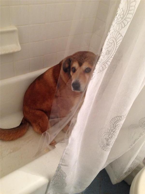 Mình trốn ở đây chắc ổng không thấy đâu.
