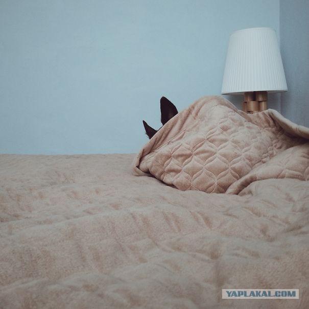 Tôi dặn rồi đó nhé, giường này người nằm, không được cho chó mèo lên nằm nhé, con nào lên nằm cho nó nhịn ăn một tuần nhé.