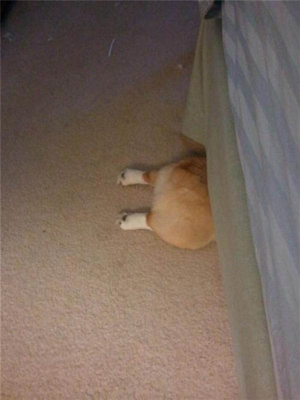 Tôi không nhìn thấy có con chó nào trốn dưới gầm giường cả, mọi người có ai thấy không?