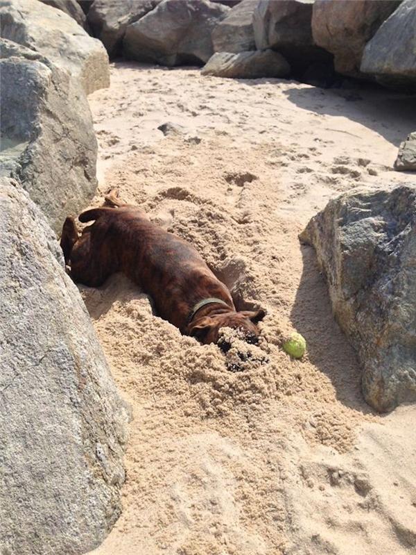 Có ai nhìn thấy có con chó nào đang trốn dưới cát không thế?