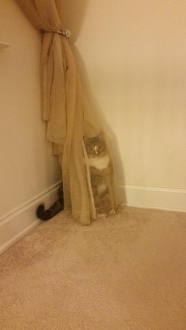 Mọi người đi tìm xem con mèo nó trốn ở đâu, nhớ chừa cái rèm cửa ra vì nó mỏng thế mà trốn sao cho được.