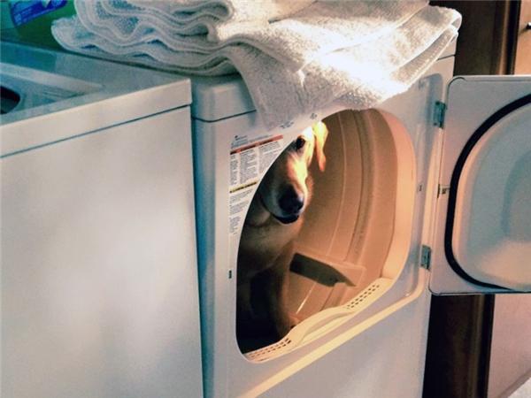 Thanh niên nghịch dại. May mà không có đứa nhỏ nào nghịch dại hơn bấm nút máy giặt đó nhé.