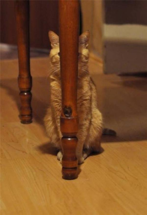 Mình trốn sau cái chân bàn này rồi, chắc chắn không ai trông thấy đâu.