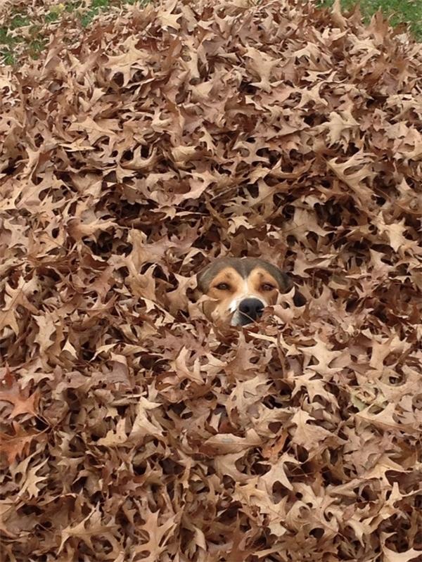 Hình như có tiếng sột soạt trong đám lá khô thì phải. Nhưng chắc con Ki nó không có trốn trong đó đâu.