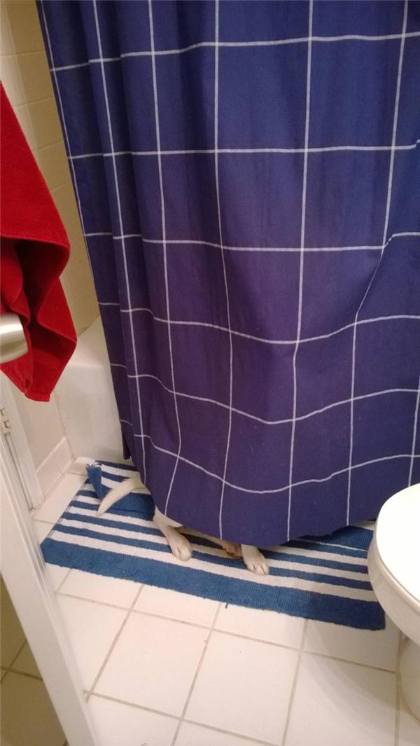 Ủa mới dẫn nó vô nhà tắm đây mà quay qua quay lại nó chạy đâu mất tiêu rồi?