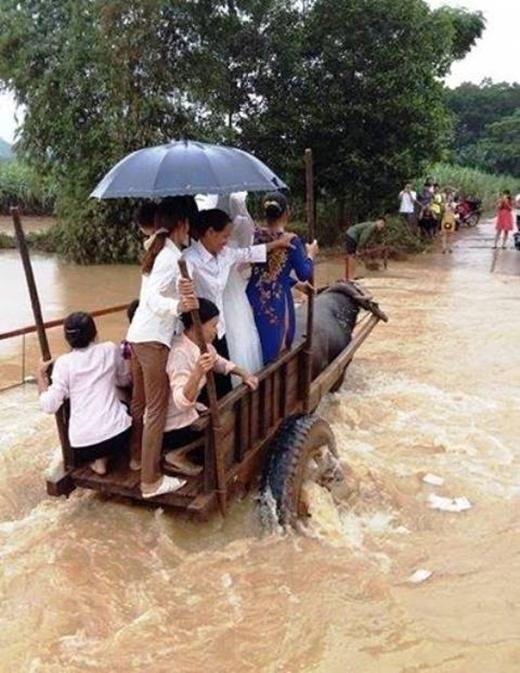 Cô dâu chú rể cùng họ hàng ngồi xe trâu kéo vượt nước lũ.(Ảnh: Internet)