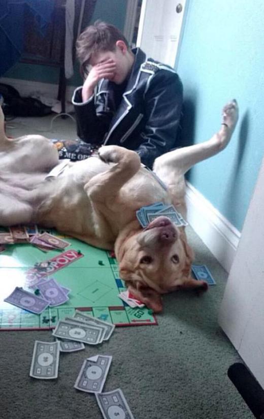 """Chơi cờ với bạn một thắng hai thua chứ chơi với thú cưng chỉ có thể cười vỡ bụng vì """"độ nhây mát le vồ"""" của chúng."""