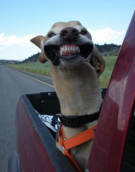 Chẳng có gì khiến bạn vui hơn một nụ cười hở lợi vô tư lự này.