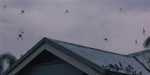 Đây là cách lũ nhện thoát khỏi những vùng bị lũ lụt hoặc di cư sang các vùng đất mới, chúng hoàn toàn không gây hại đến người và sẽ tự động bỏ đi, còn tơ nhện cũng sẽ tự tan và bay đi trong vòng một ngày.