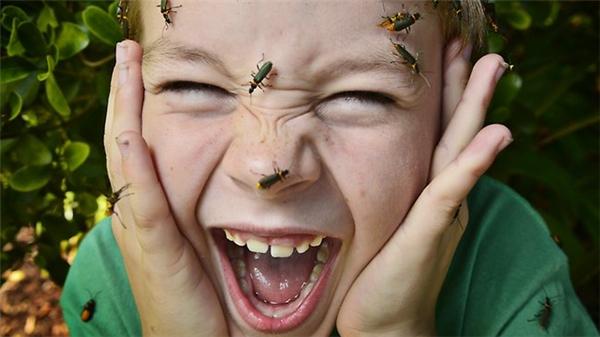 Dù loài bọ này không có độc nhưng chúng có thể phóng ra một loại chất lỏng gây đau nhức.
