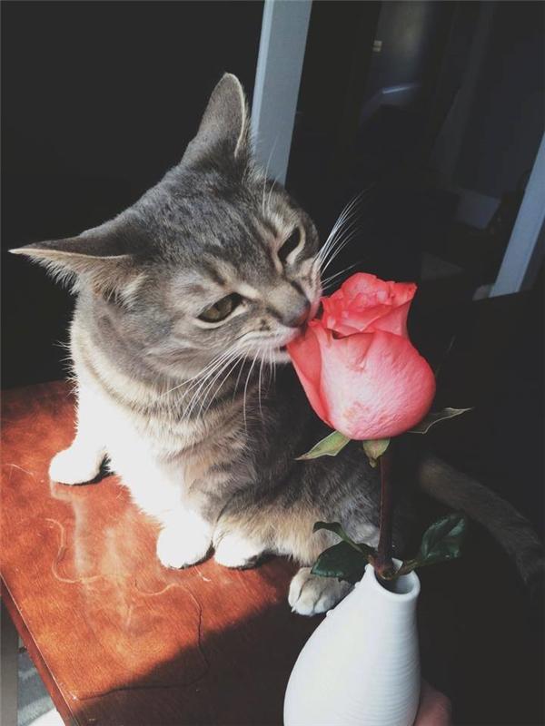 """Cả lúc """"thưởng hoa"""", nàng Chloe """"sầu đời""""vẫn giữ nguyên sinỗi buồn thế kỉ trên đôi mắt."""