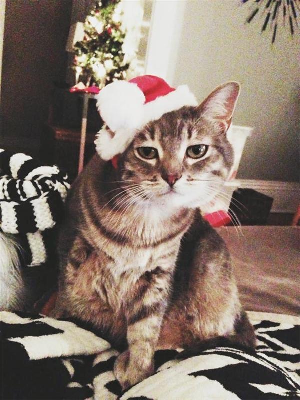 Bộ tưởng đội quả mũ Noel kì dị này là Chloe đây nở nụ cười à?