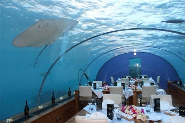 Ithaa Undersea là nhà hàng bằng kính dưới biển đầu tiên trên thế giới, có vị trí nằm ở độ sâu 4,8m so với mực nước biển. Nhà hàng này nằm trong quy mô khách sạn Conrad Maldives Hotel.(Ảnh: Internet)