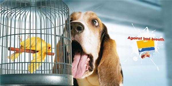 Thức ăn cho chó: Đánh bay hơi thở có mùi.