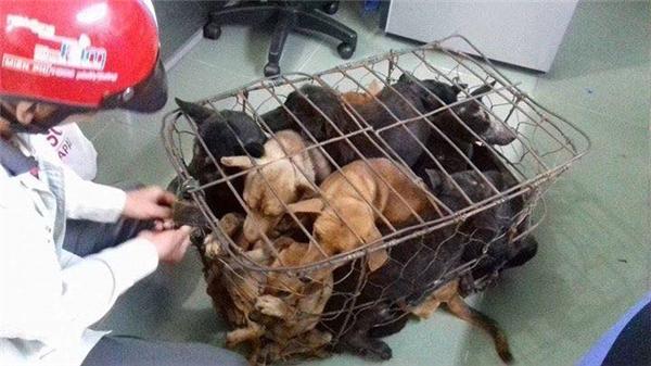 9 chú chó được giải cứu.(Ảnh: Hứa Hồng Phương)