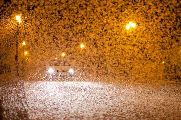 Loài sinh vật này bị ánh đèn thu hút, chúng thường bay ra vào ban đêm và vây kín những nơi phát ra ánh sáng.