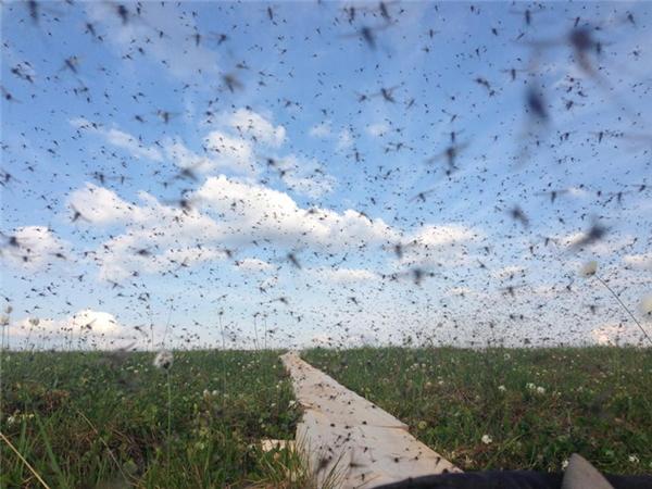"""Nếu chẳng may gặp phải một đàn muỗi như thế này thì dù có thoa kem chống muỗi cũng không thể """"toàn mạng""""."""