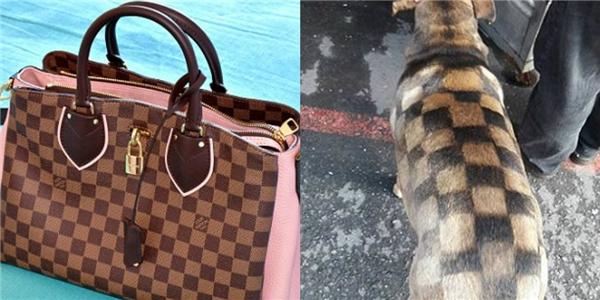 Cư dân mạng so sánh bộ lông của chú chó với chiếc túi xáchđắt tiền